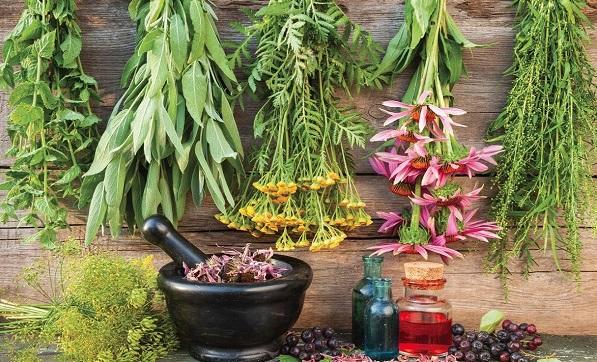 Świeżo zebrane naturalne zioła